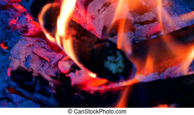 Dark live coals. Burning hardwood in detail. Burning woods shiver in hot air and gentle flames fluorescing. White ash covers the burning pieces of wood.