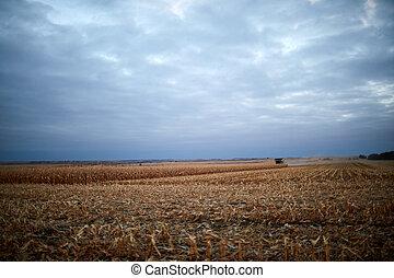 Dark moody landscape of maize fields in autumn