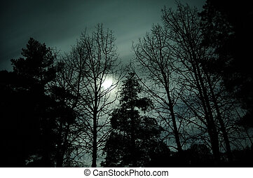 Silhouette of trees against the bright moon light of the night with motion blurred clouds passing by in front of it.