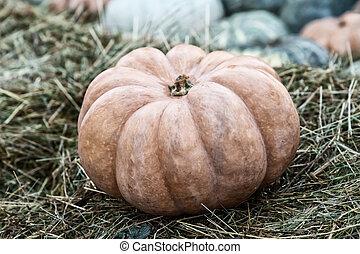 dark orange ribbed pumpkin stands alone on brown dry hay
