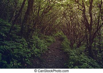 Dark pathway in the forest.