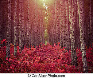 Dark pine forest with red bushes and morning sun used as background