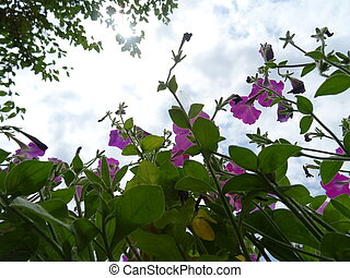 Dark Pink Flowers Against the Background of the Sky