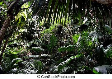 Dark Rainforest