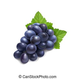 Dark red grape branch with green leaf realistic illustration