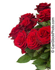 dark red roses close up - dark red roses close up isolated...