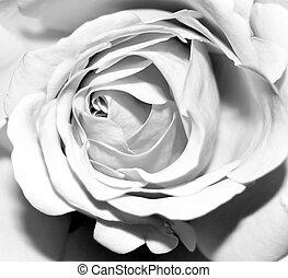 Dark Rose - black and white rose
