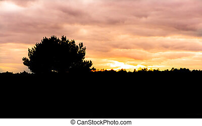 dark silhouette of a heather landscape with tree at sundown, sunset coloring the sky orange and pink