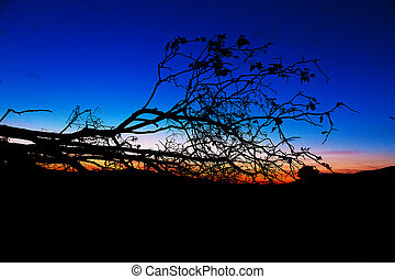 dark silhouette of a tree contrasting with beautiful sky at sunset.
