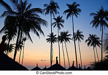 dark silhouette of palm trees over the roofs of tropical houses in sunset lights