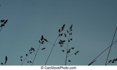 Dark silhouette of tall grass swaying against the evening sky