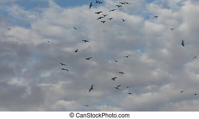 Dark silhouettes of many birds in t