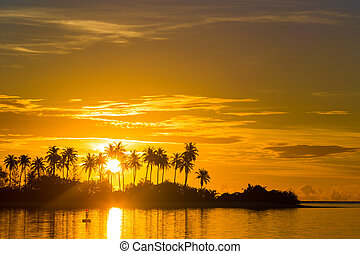 Dark silhouettes of palm trees and amazing cloudy sky at sunset