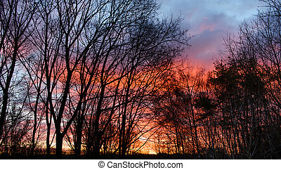Dark silhouettes of trees and amazing cloudy sky on sunset