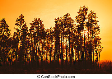 Dark Silhouettes Of Trunks And Crowns Of Trees On A Background