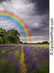 Dark storm clouds over vibrant lavender field landscape