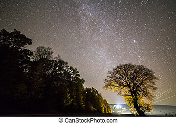 Dark trees along road under black sky with myriads of white stars and bright lights in distance.