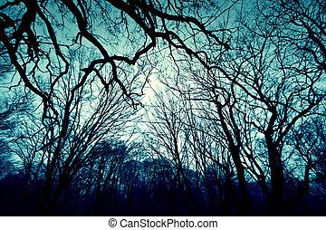 Dark winter forest background.
