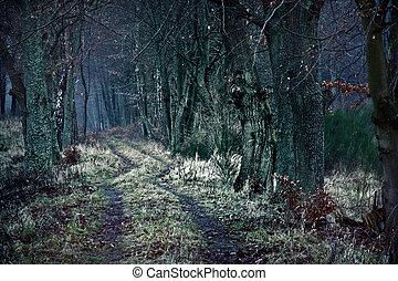 Dark winter path between dead trees.