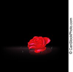 darkness and the abstract red rose with black beads