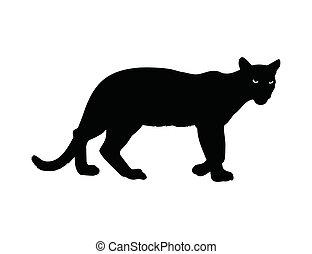 darkness., olhos, queimadura, animal, noturna, selvagem
