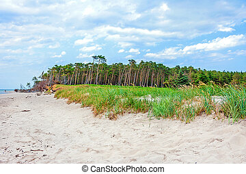 Darss Weststrand beach, grassland with the typical windswept trees