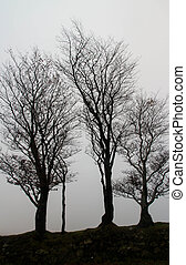 Dartmoor bare trees in mist, silhouette.