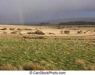dartmoor, devon, marzo, 2014