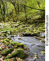 Dartmoor Stream - The River Meavy cascades over mossy rocks...