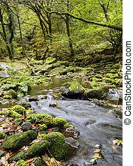 Dartmoor Stream - The River Meavy cascades over mossy rocks...