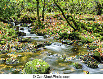 The River Meavy cascades over mossy rocks through Burrator Wood in Dartmoor National Park in Devon
