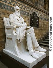 darwin, statua