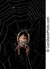 Darwin's bark spider (Caerostris darwini) Madagascar -...