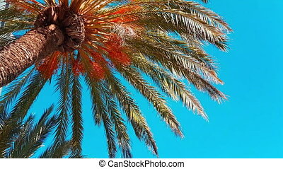 Date Palm Branches Moving in The Wind - Date Palm Tree With...