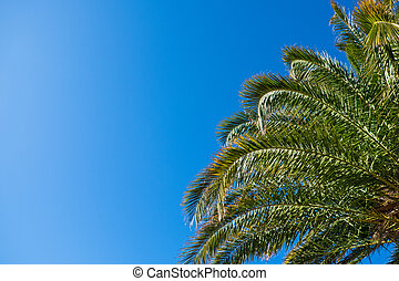 Date palm leaves in sunshine on clear cloudless blue sky background, copy space. Concept summertime, vacation, tropics, nature, exotic places, sales. For social media, travel agencies. Bottom view