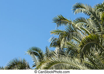 palm tree canopy against blue sky