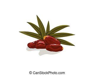 dates fruit on white background