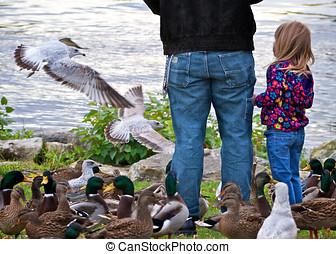 daugher, alimentation, père, oiseaux