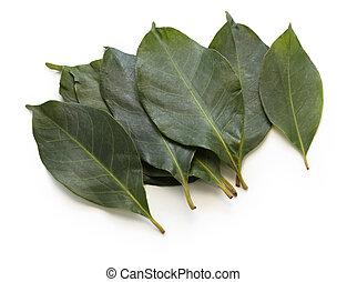 daun salam, indonesian bay leaf