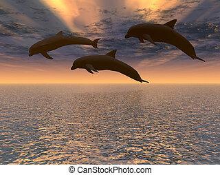 dauphin, coucher soleil, rouges