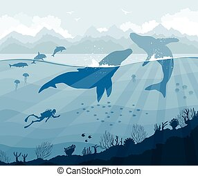 dauphins, baleines, fish, méduse, plongeur
