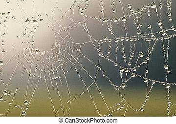 dauw bedekte, spinnenweb