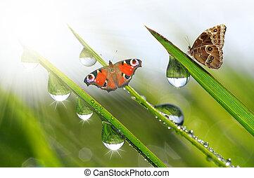 dauw, met, vlinder