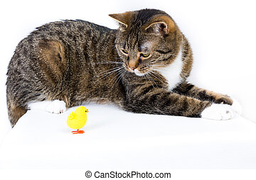 cat playing with a toy duck against white background