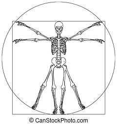 skeleton - davinci skeleton