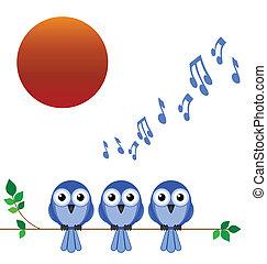 dawn chorus - Morning dawn chorus of birdsong against a...