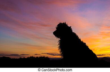 Dawn Dog Waiting