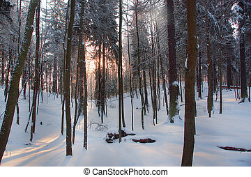 Dawn in a winter snowy forest from deciduous trees