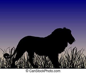 Dawn in savanna with lion