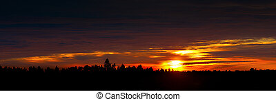 Dawn in Scandinavian forest - panoramic view of dawn in...